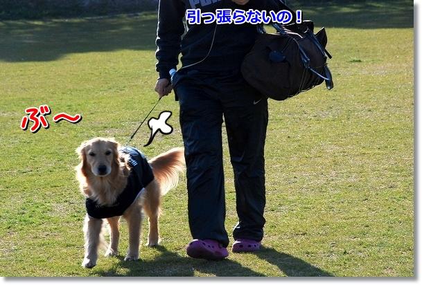 DSC_0313_20120407011945.jpg