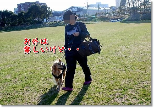 DSC_0314_20120407011945.jpg
