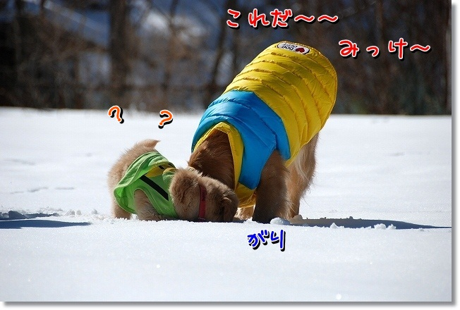 DSC_0324_20120221223203.jpg