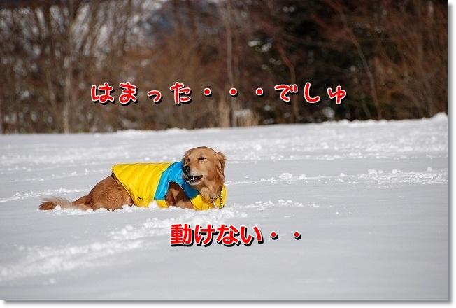 DSC_0327_20120221223202.jpg