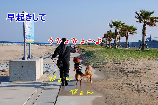 DSC_0333.jpg