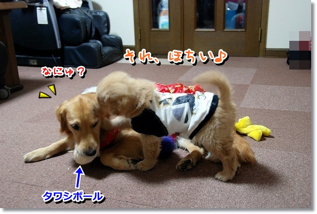 DSC_0339_20120210233608.jpg