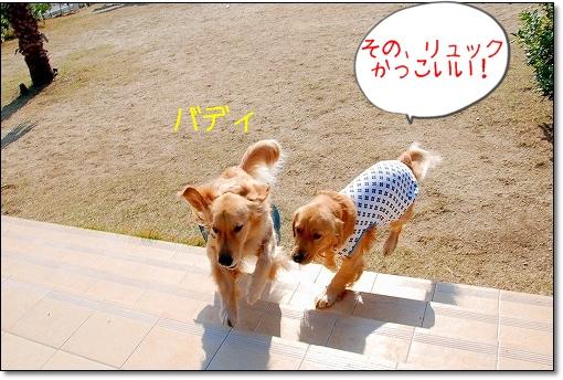 DSC_0340_20101126234809.jpg