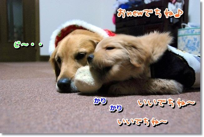 DSC_0352_20120210233704.jpg