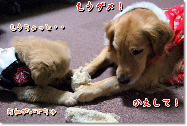 DSC_0357_20120210233702.jpg