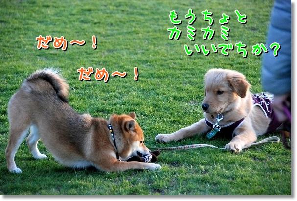 DSC_0357_20120416003700.jpg