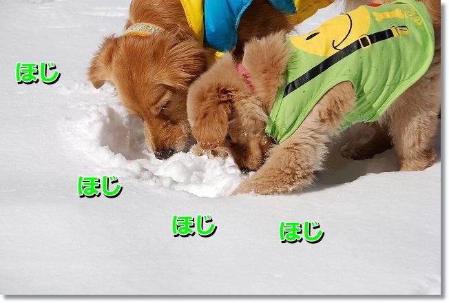 DSC_0360_20120221223201.jpg