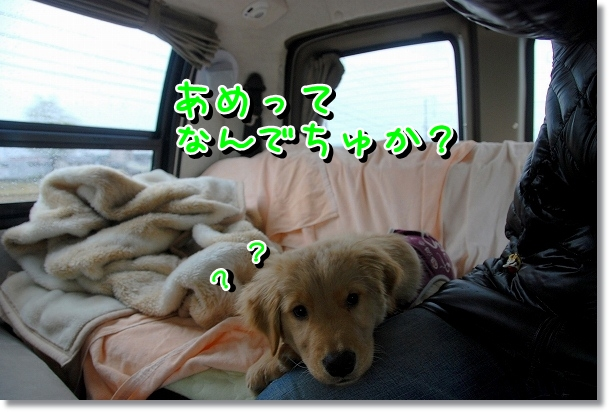 DSC_0360_20120330014736.jpg
