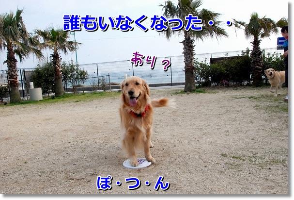 DSC_0376_20120417224954.jpg