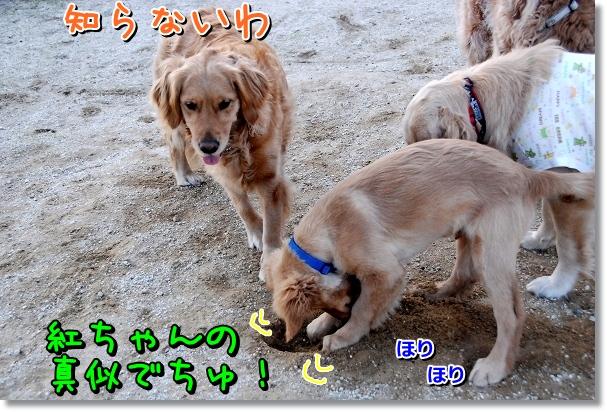 DSC_0380_20120405202735.jpg