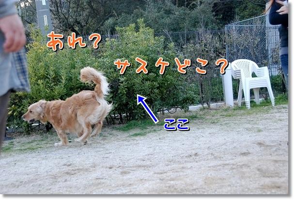 DSC_0385_20120405202825.jpg