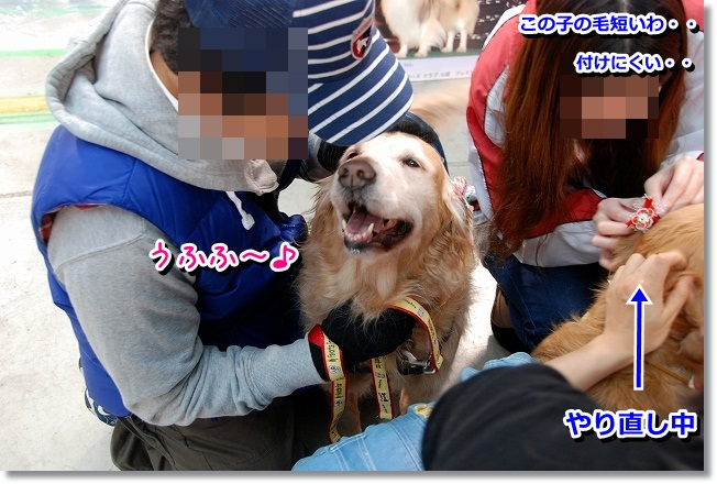 DSC_0393_20120201233247.jpg
