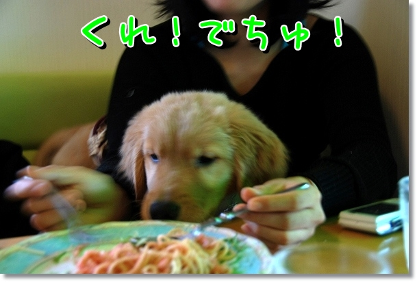 DSC_0393_20120330014816.jpg