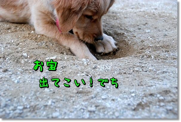 DSC_0393_20120405202837.jpg