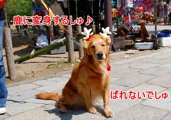 DSC_0397_20110501102042.jpg