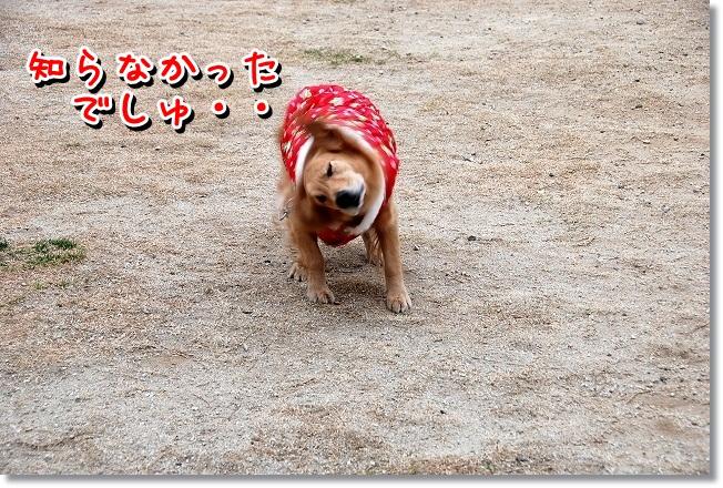 DSC_0402_20120118232428.jpg