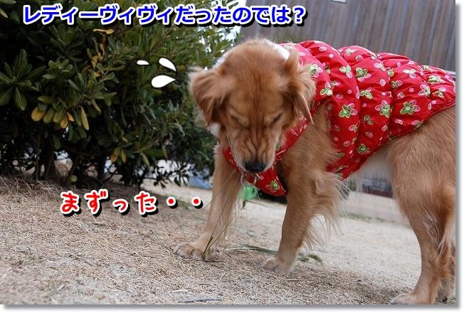 DSC_0403_20120118232428.jpg