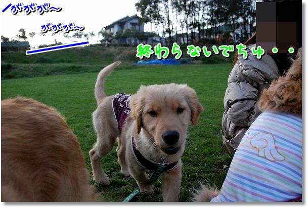 DSC_0404_20120331185749.jpg