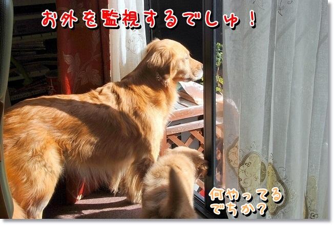DSC_0409_20120218232648.jpg