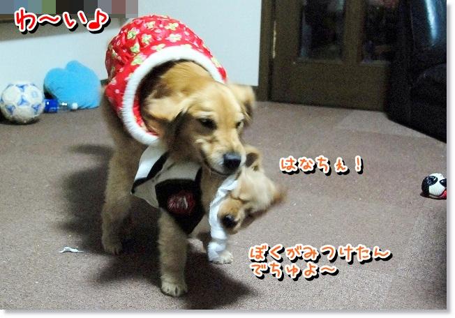 DSC_0411_20120210233727.jpg