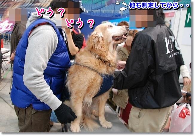 DSC_0412_20120201233333.jpg
