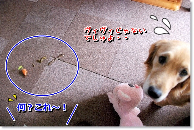 DSC_0412_20120218232647.jpg