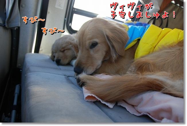 DSC_0413_20120221223307.jpg