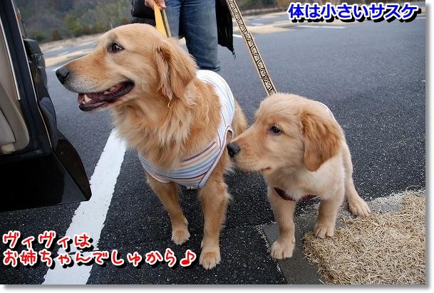 DSC_0413_20120330014815.jpg