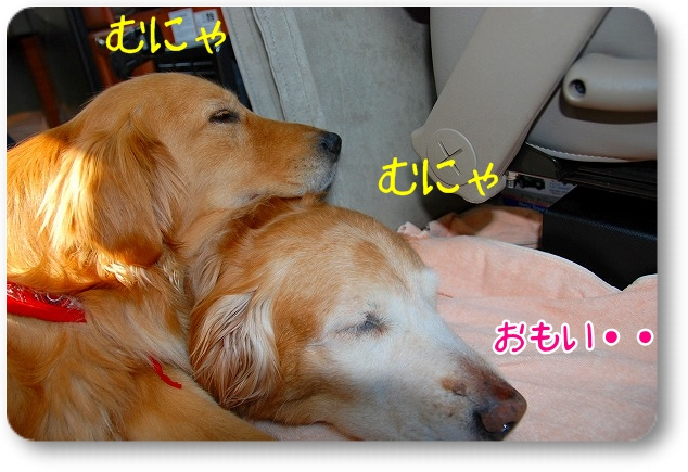 DSC_0439_20110501102130.jpg