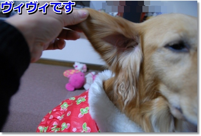 DSC_0439_20120116215832.jpg