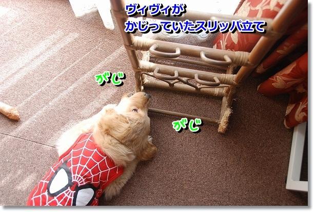 DSC_0444_20120224093946.jpg