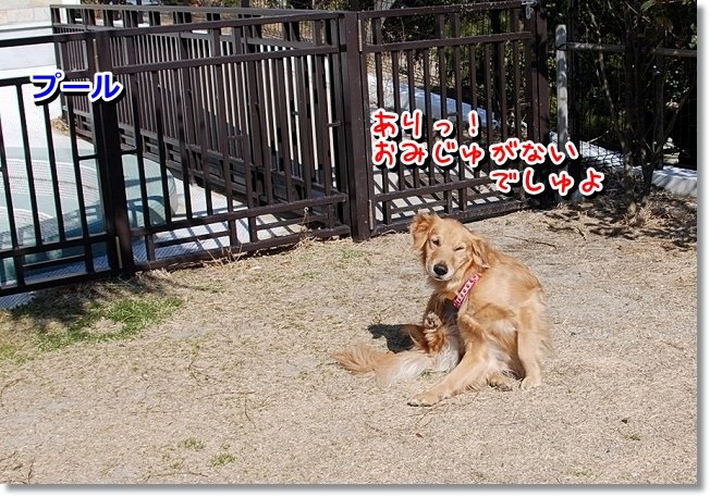 DSC_0445_20120215011740.jpg