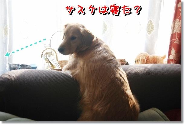 DSC_0445_20120224093946.jpg