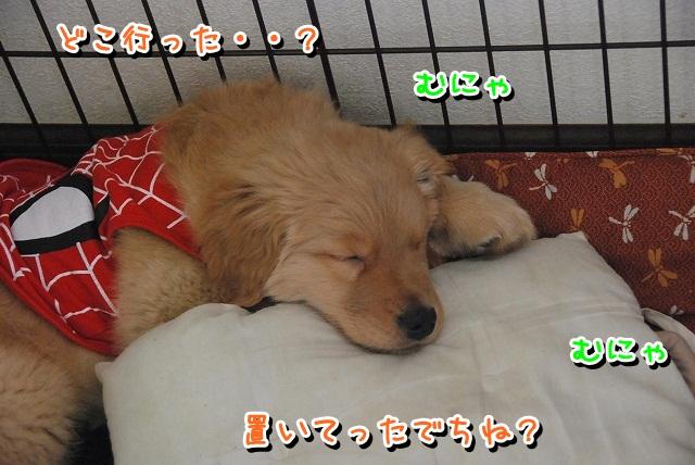 DSC_0447_20120213000752.jpg
