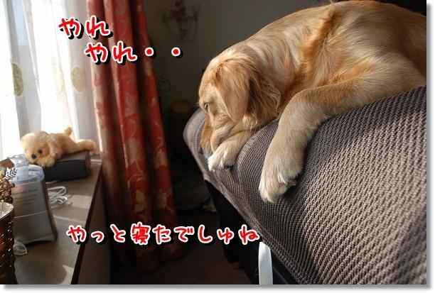 DSC_0452_20120224094104.jpg