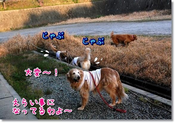 DSC_0453_20120331185822.jpg