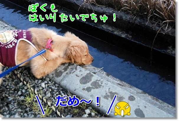 DSC_0473_20120331185915.jpg