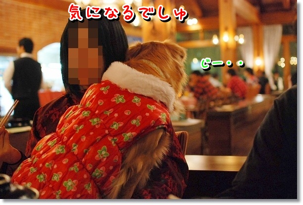 DSC_0487_20120108130812.jpg