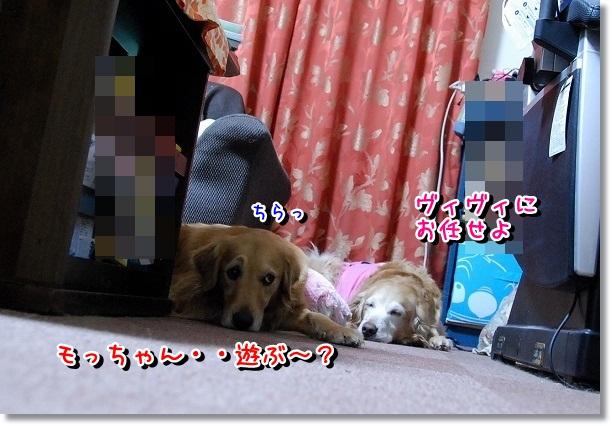 DSC_0499_20120225011505.jpg