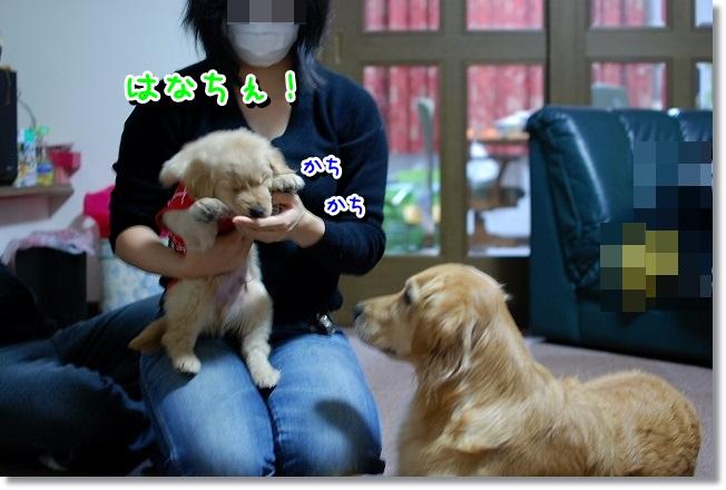 DSC_0502.jpg
