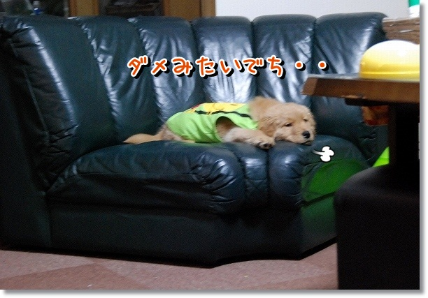 DSC_0502_20120225011505.jpg