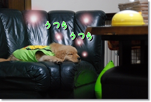 DSC_0503_20120225011505.jpg