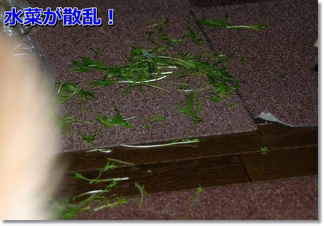 DSC_0510_20120222192949.jpg