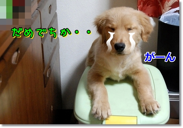 DSC_0602_20120331004533.jpg