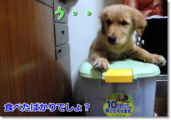 DSC_0607_20120331004532.jpg