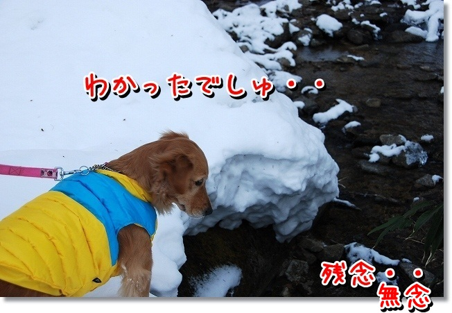 DSC_0684_20120214001030.jpg