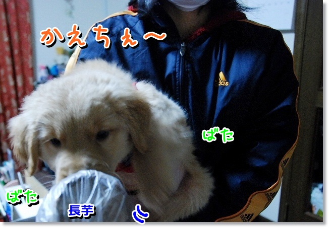 DSC_0729.jpg