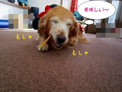 IMG_0564.jpg