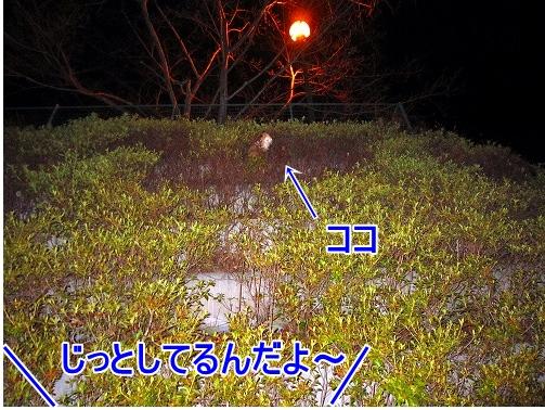 IMG_0878jp.jpg
