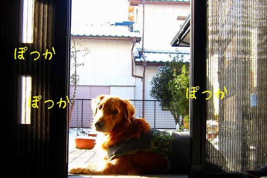 IMG_1169.jpg